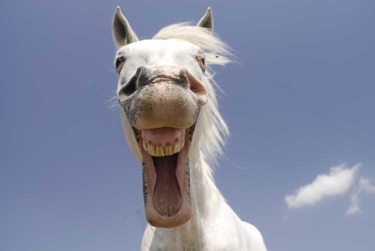 horse-happy